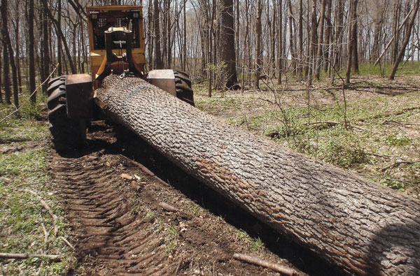 Olson Logging Skidder